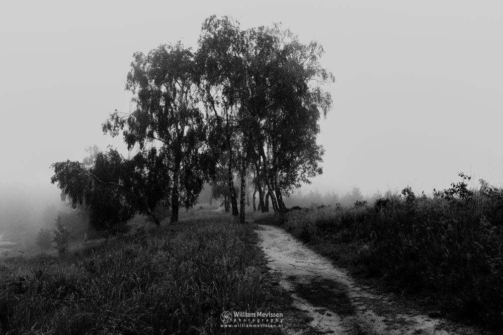 Photo in Black and White #light #tree #landgoed #hamert #maasduinen #limburg #wellerlooi #noord-limburg #national park #nature #limburgs landschap #trees #route #forest #path #mist #fog #foggy #silhouettes #birch #birches #curvy