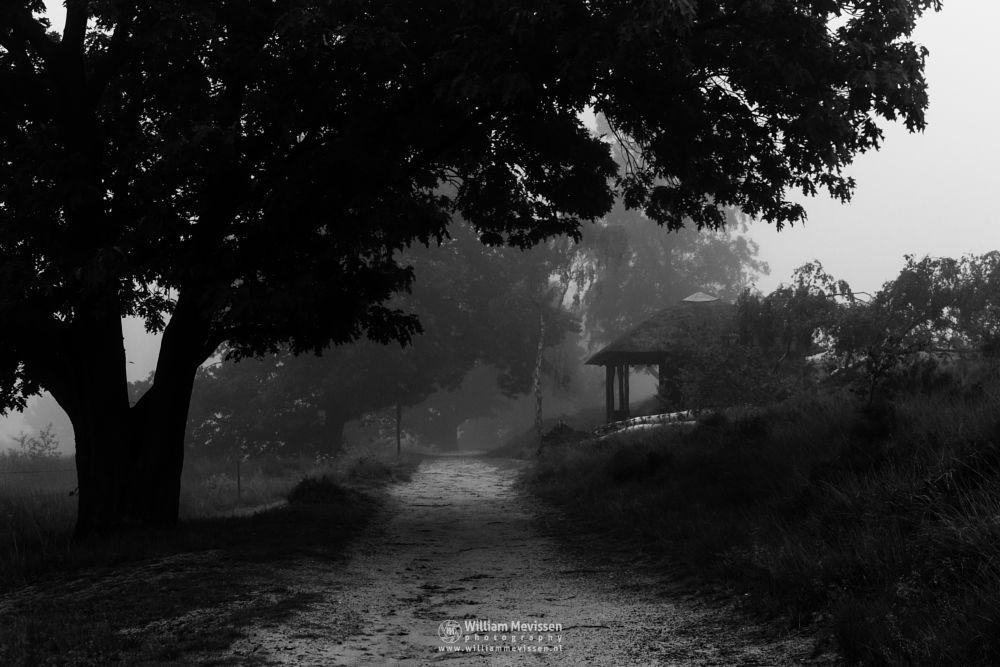 Photo in Black and White #landgoed #landgoed de hamert #estate #de hamert #hamert #maasduinen #noord-limburg #limburg #wellerlooi #national park #nature #limburgs landschap #trees #forest #cabin #pikmeeuwenwater #blackandwhite #mist #fog #foggy #silhouettes #tree #light
