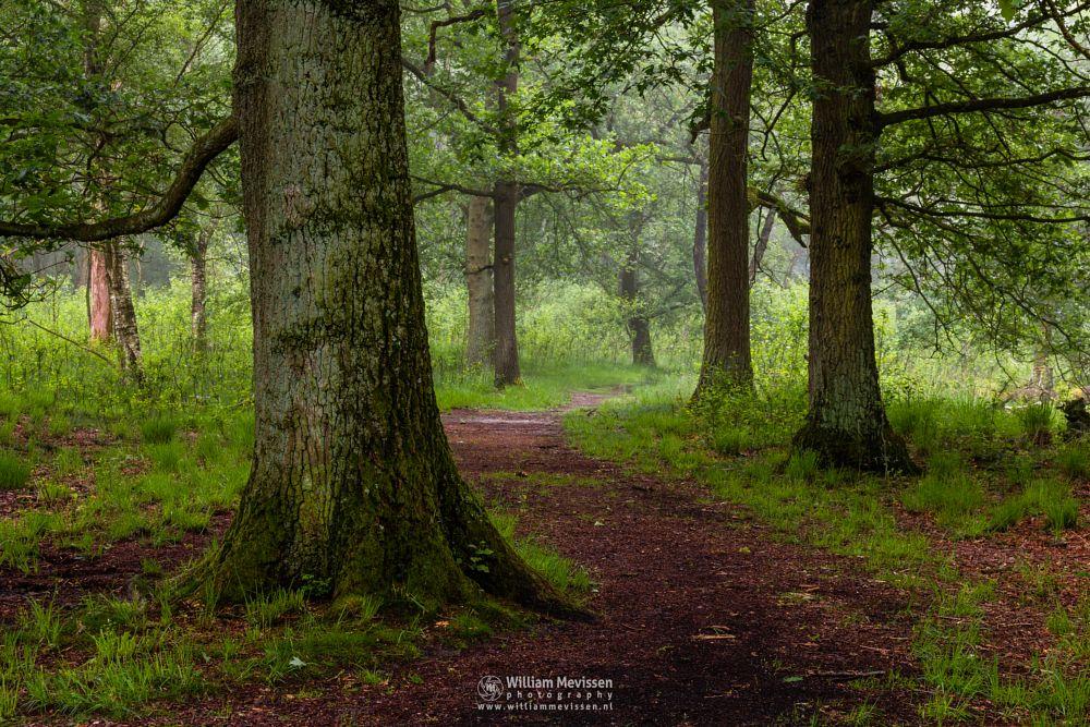Photo in Nature #light #tree #landgoed #hamert #de hamert #maasduinen #noord-limburg #limburg #limburgs landschap #wellerlooi #national park #nature #trees #route #forest #path #mist #fog #foggy #silhouettes #trunks #trunk #curvy