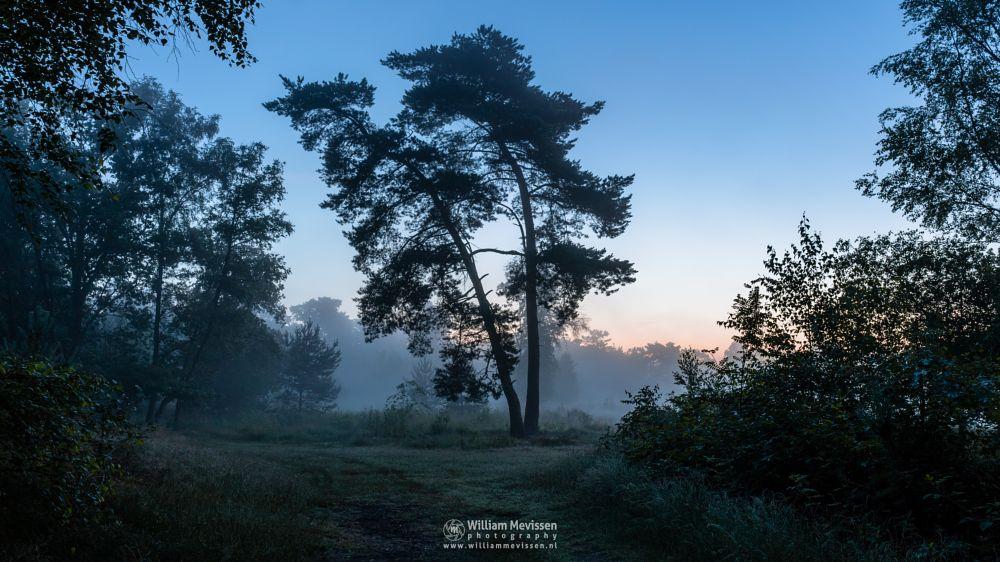 Photo in Landscape #ravenvennen #lomm #limburg #noord-limburg #arcen #nature #nature reserve #forest #woods #velden #netherlands #fen #heatland #venlo #riverdunes #dune #swamp #mist #fog #foggy #mood #silhouette #silhouettes #trees #tree #path #twilight