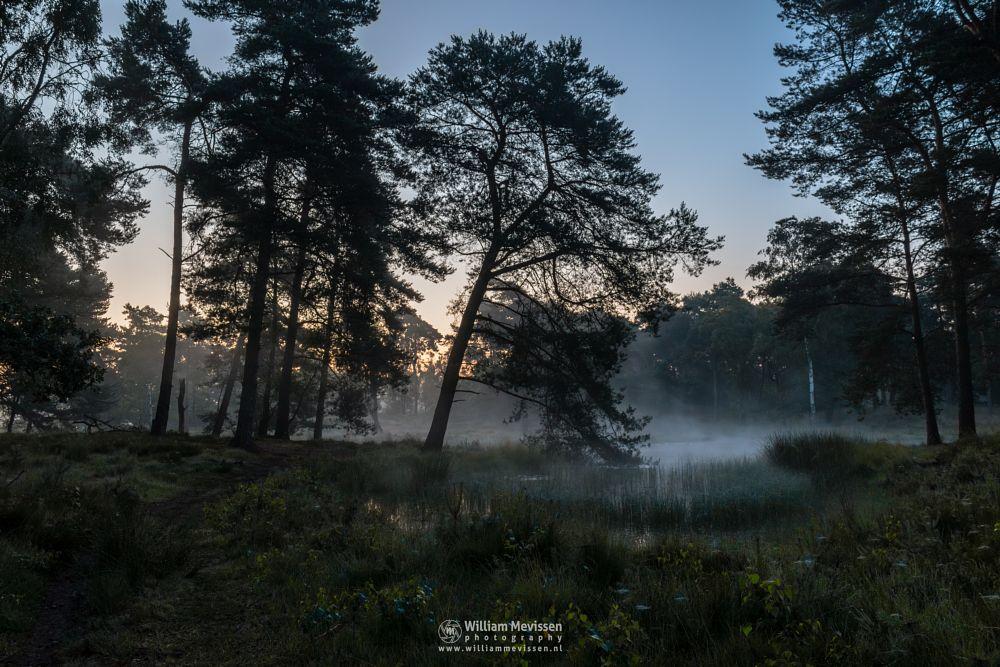 Photo in Nature #ravenvennen #lomm #limburg #noord-limburg #arcen #nature #nature reserve #riverdunes #forest #woods #velden #netherlands #venlo #fen #heatland #dune #swamp #mist #fog #foggy #mood #silhouette #silhouettes #trees #tree #path #twilight