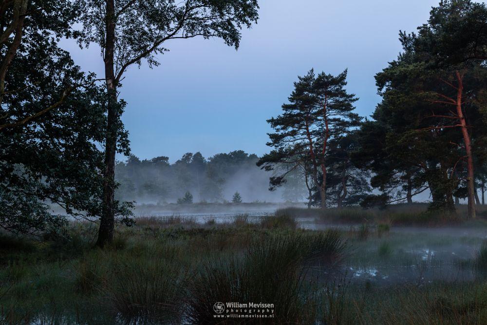 Photo in Landscape #ravenvennen #lomm #limburg #noord-limburg #arcen #nature #nature reserve #forest #dune #woods #velden #netherlands #venlo #foggy #fog #mist #swamp #riverdunes #fen #mood #silhouette #silhouettes #trees #tree #twilight