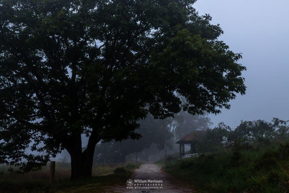 Photo in Nature #light #tree #wellerlooi #hamert #maasduinen #noord-limburg #limburg #national park #nature #trees #forest #mist #fog #foggy #mood #silhouette #path #twilight