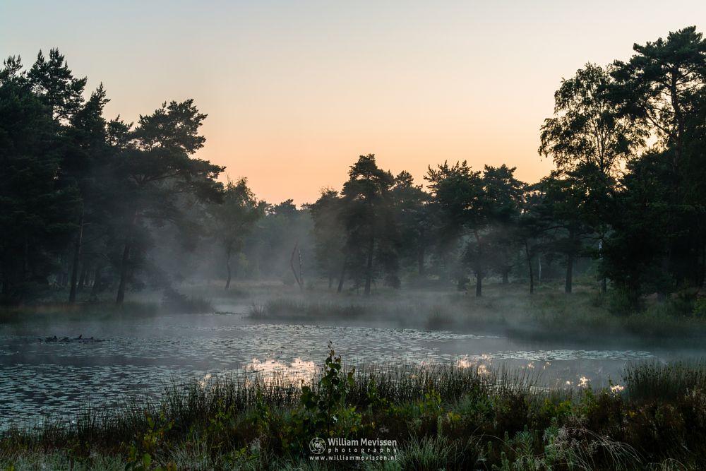 Photo in Nature #ravenvennen #lomm #limburg #noord-limburg #arcen #nature #nature reserve #forest #woods #velden #netherlands #venlo #fen #heatland #riverdunes #dune #swamp #mist #fog #foggy #mood #silhouette #silhouettes #trees #tree #twilight #sunrise