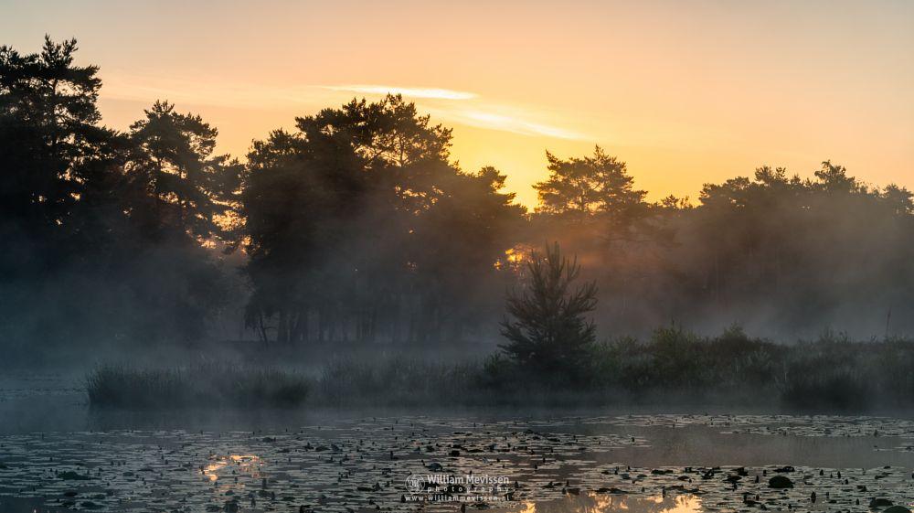 Photo in Landscape #ravenvennen #lomm #limburg #noord-limburg #arcen #nature #nature reserve #forest #woods #swamp #velden #netherlands #venlo #fen #heatland #riverdunes #dune #sunrise #mist #fog #foggy #mood #silhouette #silhouettes #trees #tree #rays #lightrays #beams