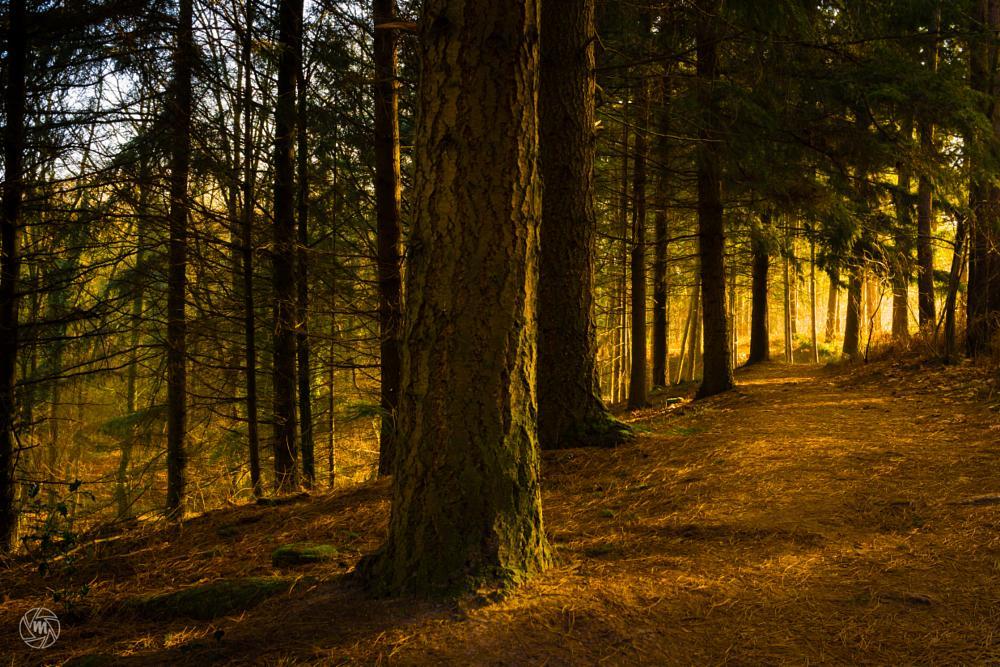 Photo in Nature #haelen #het leudal #heyhuysen #heytse #leudal #light #limburg #midden-limburg #nature #nature reserve #netherlands #pine trees #pinewood #forest #shadows #roggel #neer #nunhem #trees