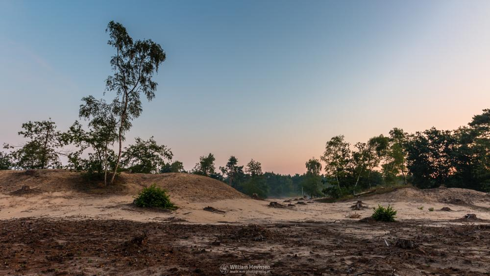 Photo in Landscape #boshuizerbergen #boschhuizerbergen #limburg #venray #nature #nature reserve #forest #woods #juniper #juniper thickets #noord-limburg #shifting sand #sand #limburgs landschap #netherlands #pine #pine forest #desolate #desolated #desolate land #twilight #sunrise #hdr