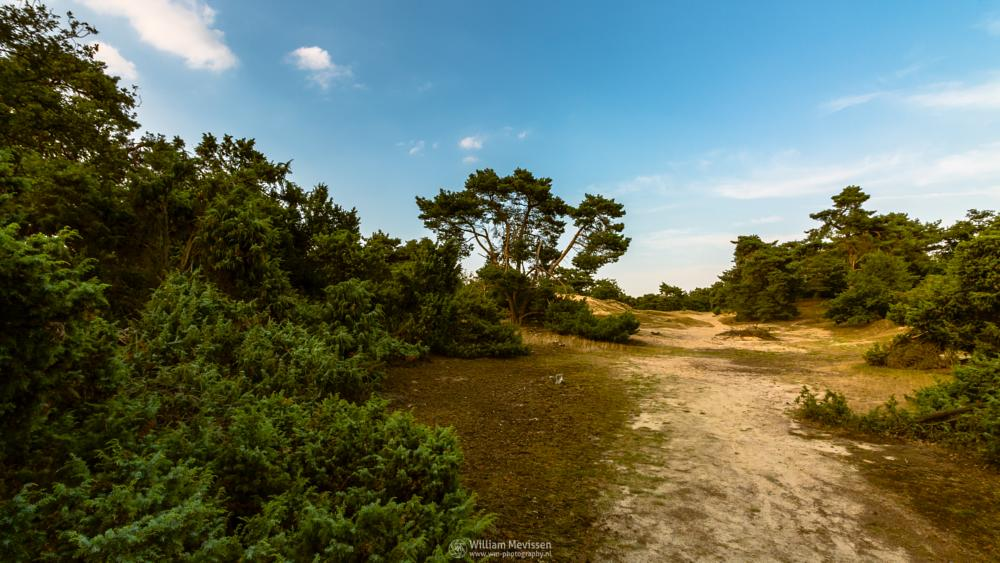 Photo in Landscape #boshuizerbergen #boschhuizerbergen #limburg #noord-limburg #venray #nature #nature reserve #forest #woods #juniper #juniper thickets #sand #shifting sand #heathland #heather #limburgs landschap #netherlands #pine #pine forest