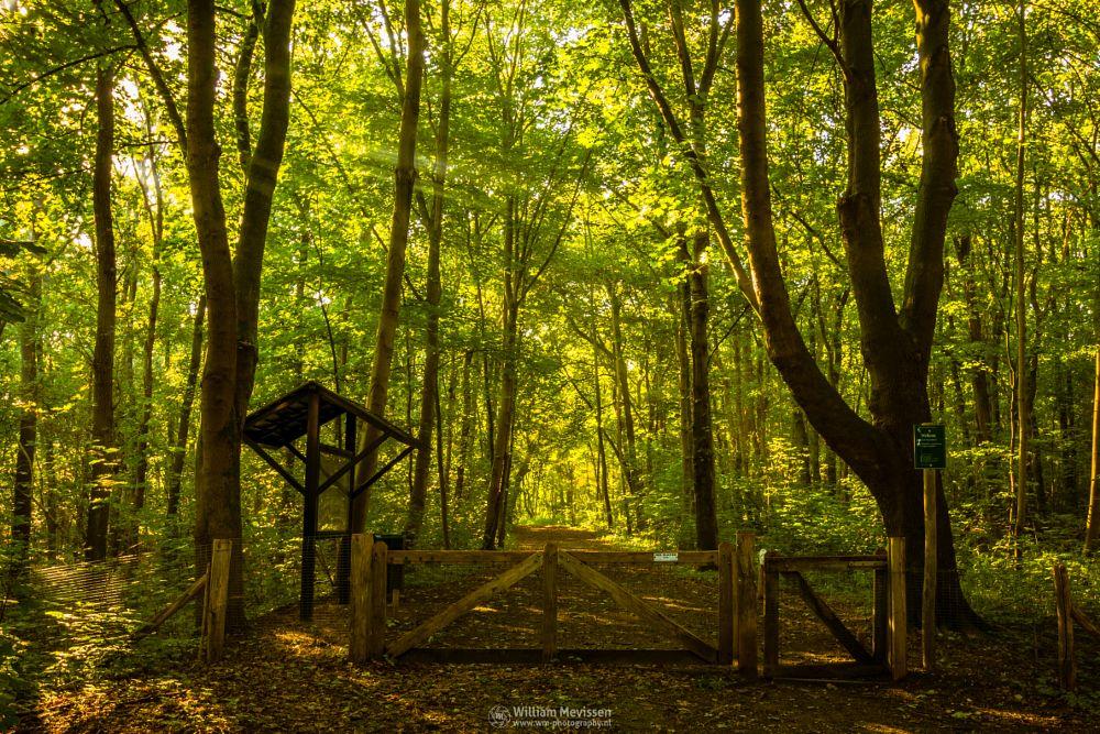 Photo in Nature #maasduinen #limburg #noord-limburg #national park #nature #limburgs landschap #bosserheide #trees #tree #sunrays #light #path #welkom #welcome #hdr