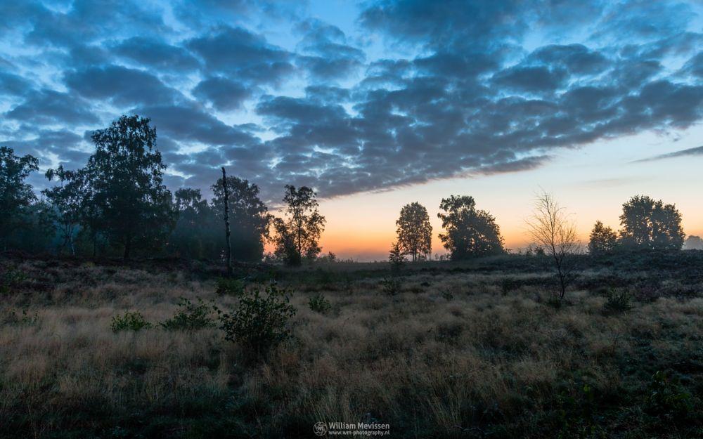 Photo in Landscape #sunrise #orange #sunlight #light #tree #sky #serene #peaceful #clouds #landgoed #landgoed de hamert #estate #twilight #mist #misty #fog #foggy #de hamert #hamert #maasduinen #limburg #noord-limburg #wellerlooi #national park #nature #limburgs landschap #mistic