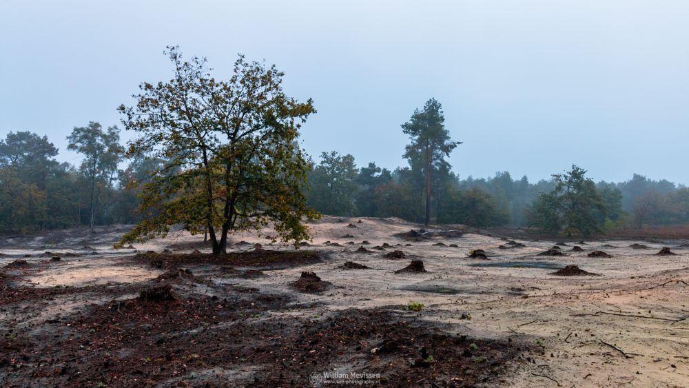 Photo in Landscape #boshuizerbergen #boschhuizerbergen #limburg #noord-limburg #venray #nature #nature reserve #forest #woods #sand #shifting sand #limburgs landschap #netherlands #pine #pine forest #misty #mist #foggy #fog #autumn #mood #moody #stumps #stump #desolate #desolate land #desolate tree
