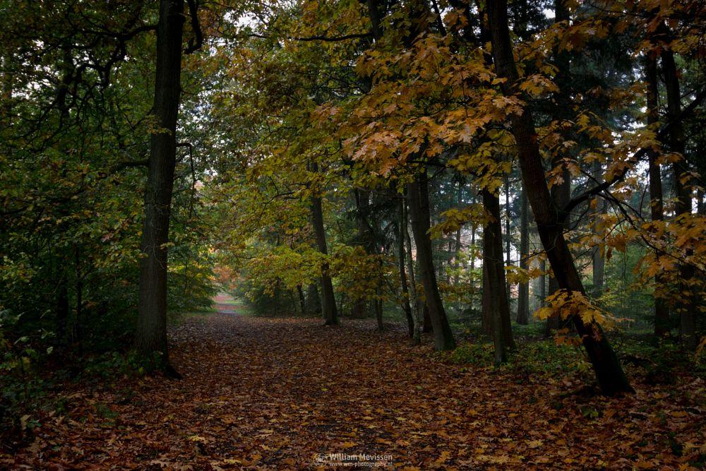 Photo in Nature #geijsteren #venray #oostrum #landgoed geijsteren #estate #landgoed #weichs de wenne #limburg #noord-limburg #nature #forest #nature reserve #woods #autumn #leaves #foliage #red #green #orange #yellow #rainy #misty #drizzly #geysteren