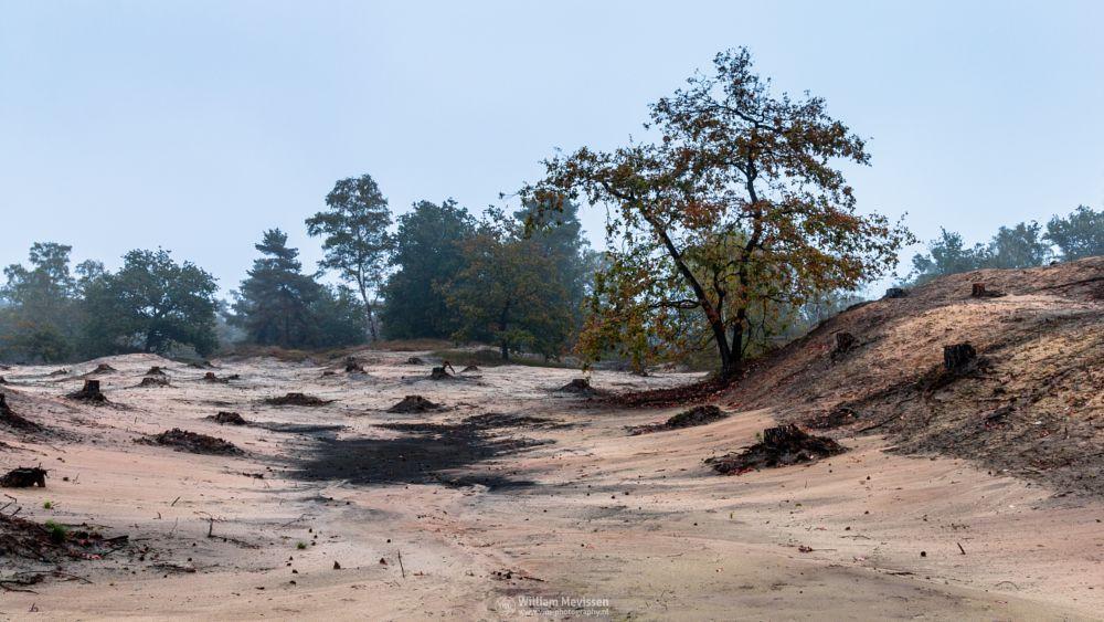 Photo in Landscape #boshuizerbergen #boschhuizerbergen #limburg #noord-limburg #venray #nature #nature reserve #forest #woods #sand #shifting sand #limburgs landschap #netherlands #pine forest #pine #misty #mist #foggy #autumn #moody #fog #stump #mood #stumps #desolate #desolate land #desolate tree