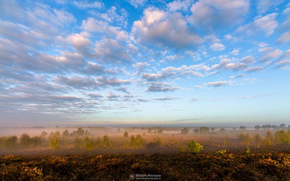 Photo in Landscape #sunrise #orange #sunlight #light #tree #sky #clouds #landgoed #landgoed de hamert #de hamert #estate #mist #misty #fog #foggy #hamert #maasduinen #noord-limburg #limburg #wellerlooi #national park #limburgs landschap #heather #heathland
