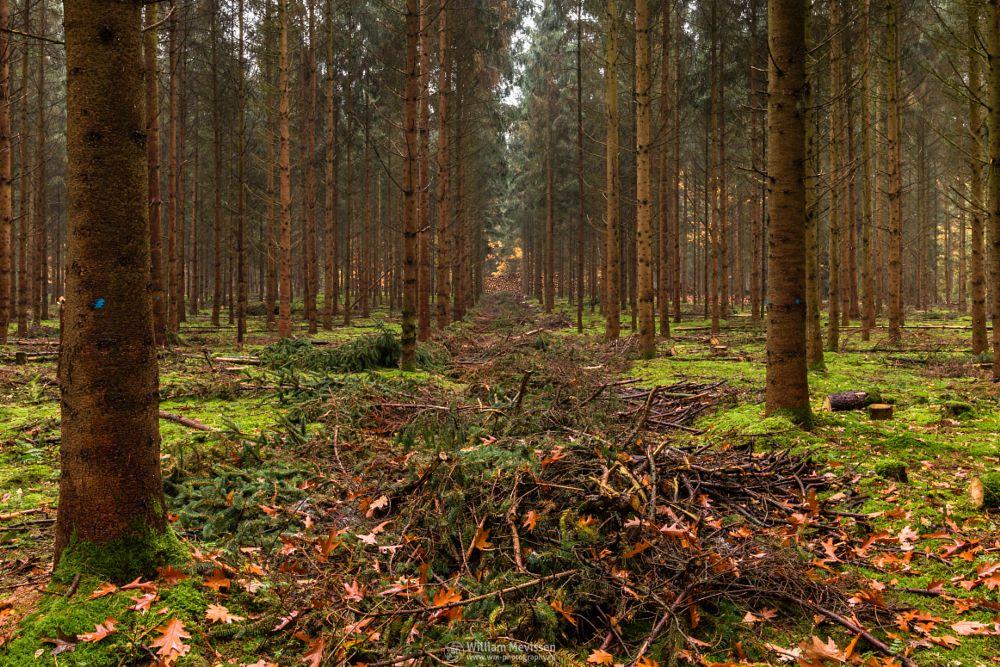 Photo in Nature #geijsteren #venray #oostrum #landgoed geijsteren #estate #landgoed #weichs de wenne #limburg #noord-limburg #nature #nature reserve #forest #woods #autumn #leaves #red #green #orange #yellow #geysteren #trunk #pruning #branches #blue dots #dots #bleu
