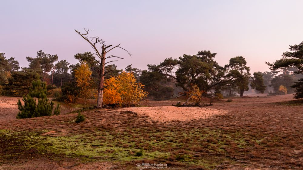 Photo in Landscape #forest #nature reserve #bosserheide #tree #trees #light #shifting sand #sand #sanddunes #twilight #sunrise #dawn #maasduinen #limburg #noord-limburg #well #national park #nature #limburgs landschap #death #death tree #foliage #autumn #orange #yellow #green #pink #purple