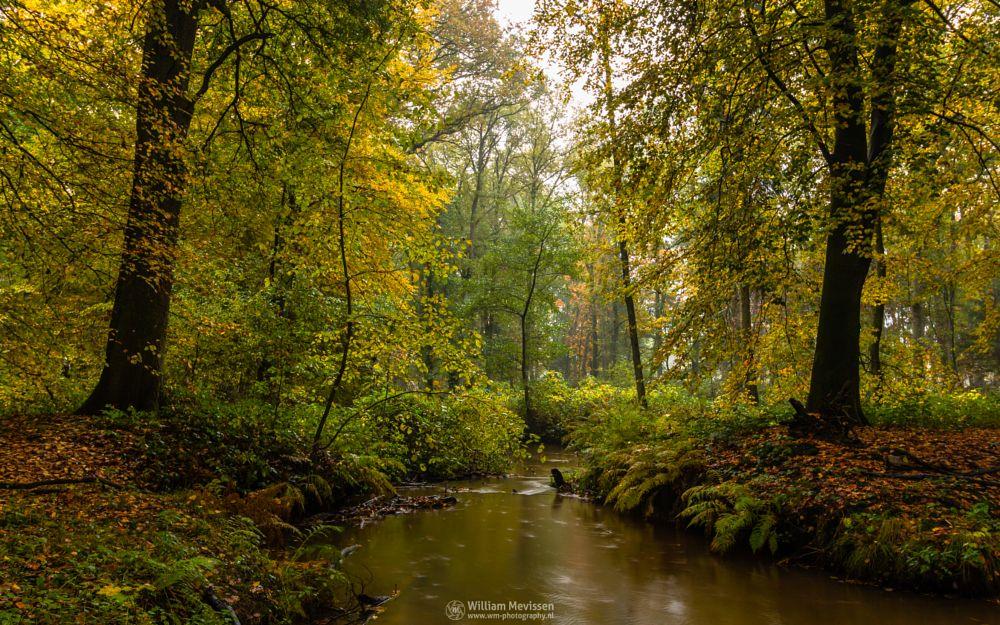 Photo in Nature #geijsteren #venray #oostrum #landgoed geijsteren #estate #landgoed #weichs de wenne #limburg #noord-limburg #nature #nature reserve #forest #woods #autumn #leaves #foliage #red #green #orange #yellow #rainy #misty #drizzly #path #geysteren #brook #beek #oostrumse beek #river #water #fern