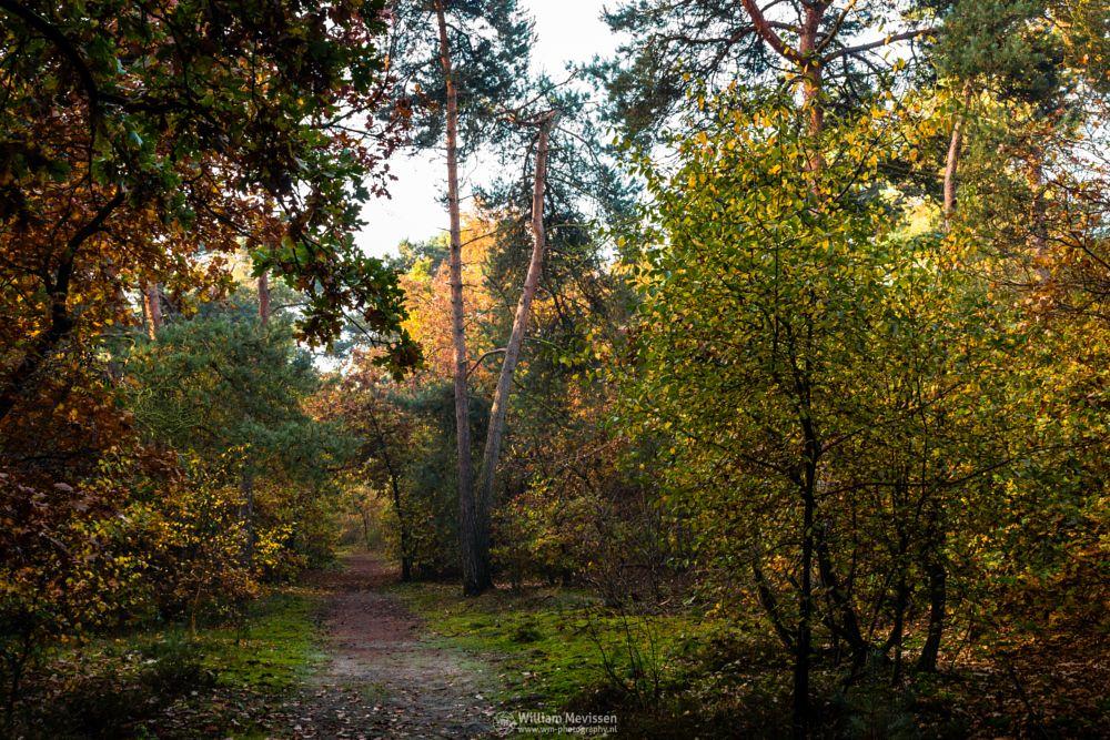 Photo in Nature #forest #nature reserve #bosserheide #tree #trees #light #sunrise #maasduinen #limburg #noord-limburg #well #national park #nature #limburgs landschap #foliage #autumn #orange #yellow #green #red #path #herfst #colorful