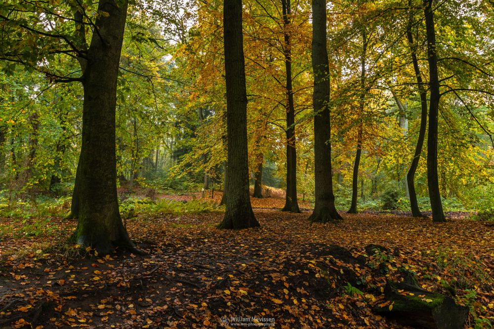 Photo in Nature #geijsteren #venray #oostrum #landgoed geijsteren #landgoed #estate #weichs de wenne #limburg #noord-limburg #nature #nature reserve #forest #woods #autumn #leaves #foliage #red #green #orange #yellow #rainy #misty #drizzly #geysteren #fern #encircled #path