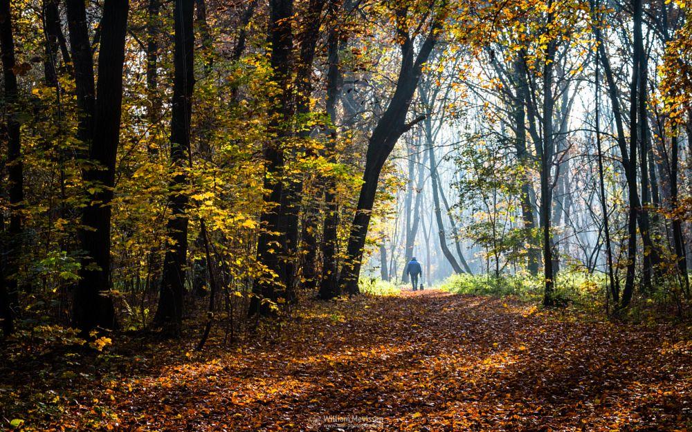 Photo in Nature #forest #nature reserve #bosserheide #tree #trees #light #sunrise #maasduinen #limburg #noord-limburg #well #yellow #national park #nature #limburgs landschap #foliage #autumn #orange #green #path #red #herfst #colorful #walking #man #dog #walking the dog #foggy #misty #fog #mist #beams