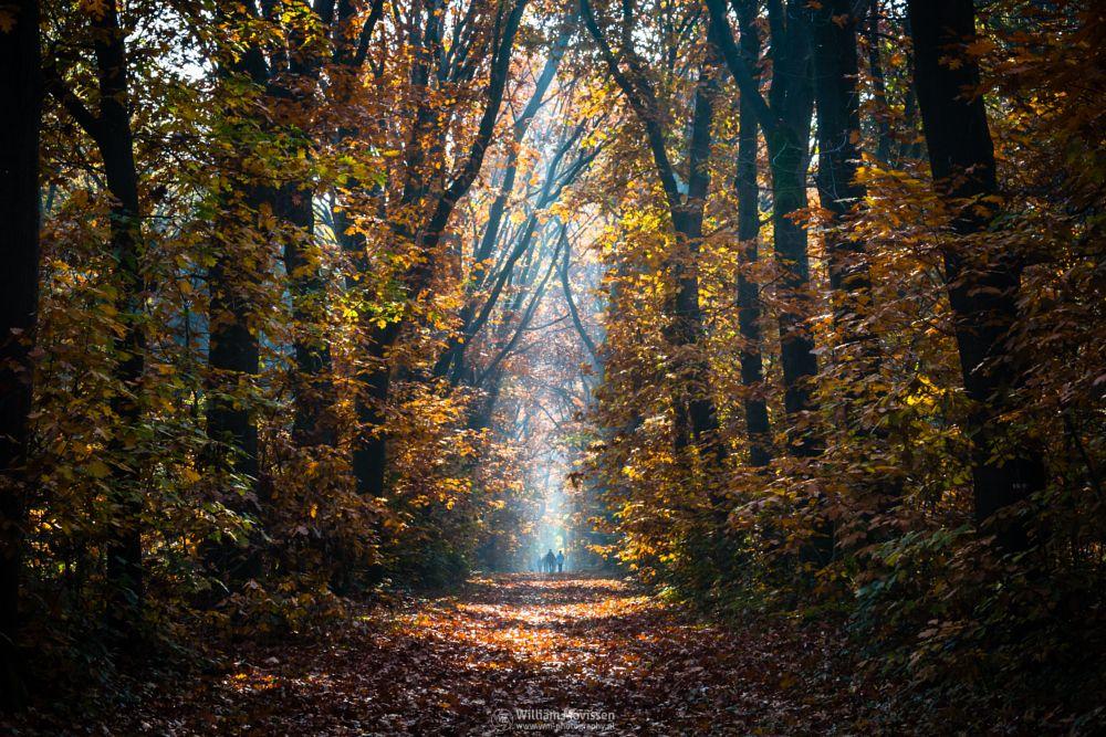 Photo in Nature #geijsteren #venray #oostrum #landgoed geijsteren #estate #landgoed #weichs de wenne #limburg #noord-limburg #nature #nature reserve #forest #woods #autumn #leaves #red #green #orange #yellow #geysteren #walking #stroll #people #light #sun #sunny #foliage