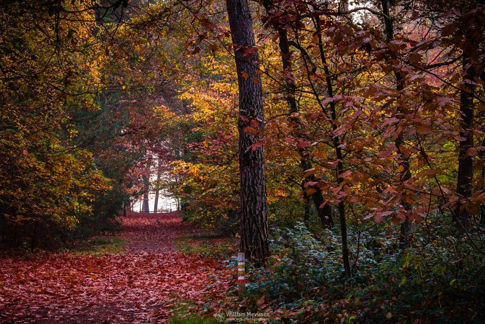 Photo in Nature #geijsteren #venray #oostrum #landgoed geijsteren #estate #landgoed #weichs de wenne #limburg #noord-limburg #nature #nature reserve #forest #woods #orange #yellow #geysteren #foliage #twilight #fog #foggy #misty #mist #palette #autumn palette