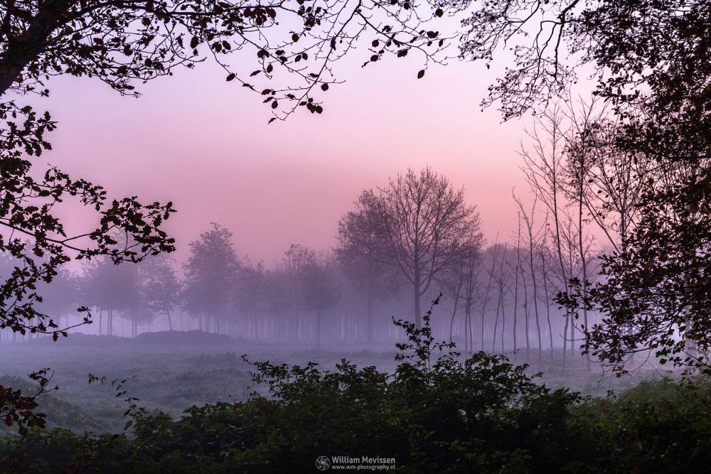 Photo in Nature #geijsteren #venray #oostrum #landgoed #landgoed geijsteren #weichs de wenne #estate #noord-limburg #limburg #nature #nature reserve #forest #woods #autumn #leaves #foliage #geysteren #red #orange #mist #misty #foggy #fog #twilight #green