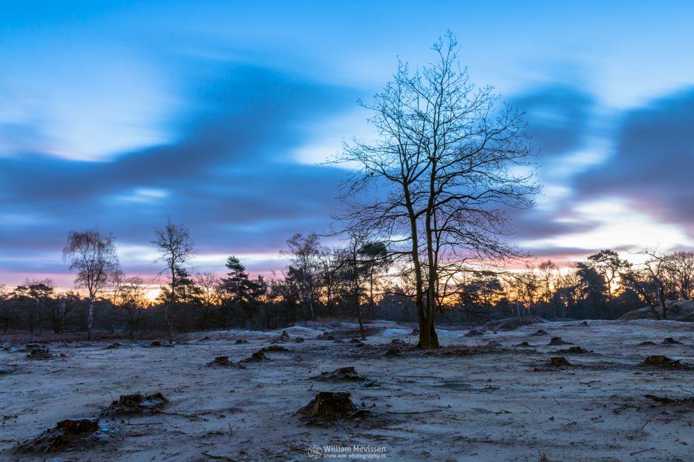 Photo in Landscape #tree #silhouette #boshuizerbergen #boschhuizerbergen #limburg #noord-limburg #venray #nature #nature reserve #sand #shifting sand #limburgs landschap #netherlands #twilight #sunrise #frost #cold #autumn #le #long exposure #25 seconds #sky #clouds #blue #orange #yellow #red