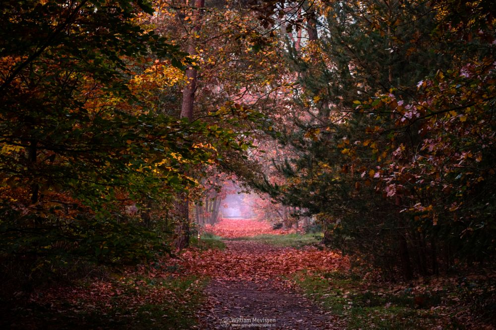 Photo in Nature #geijsteren #venray #oostrum #landgoed geijsteren #landgoed #estate #weichs de wenne #limburg #noord-limburg #nature #nature reserve #forest #woods #autumn #leaves #red #green #orange #yellow #geysteren #foliage #light #tree #trees #autumn palette #palette #mist #misty #fog #foggy