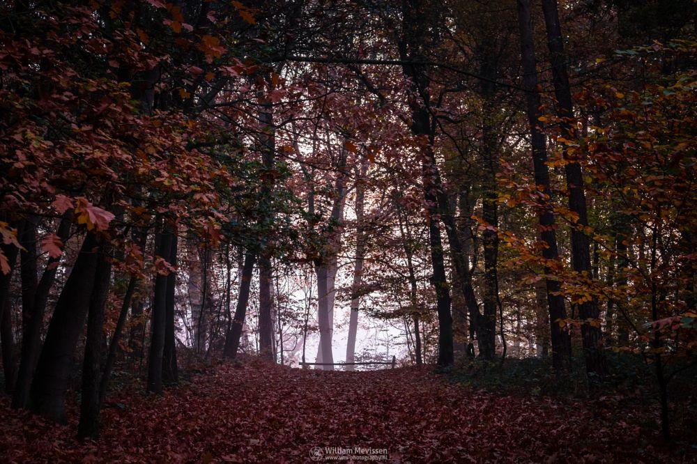 Photo in Nature #geijsteren #venray #oostrum #landgoed geijsteren #estate #landgoed #weichs de wenne #limburg #noord-limburg #nature #nature reserve #forest #woods #autumn #leaves #red #green #orange #yellow #v #foliage #light #tree #trees #autumn palette #palette #mist #misty #fog #foggy