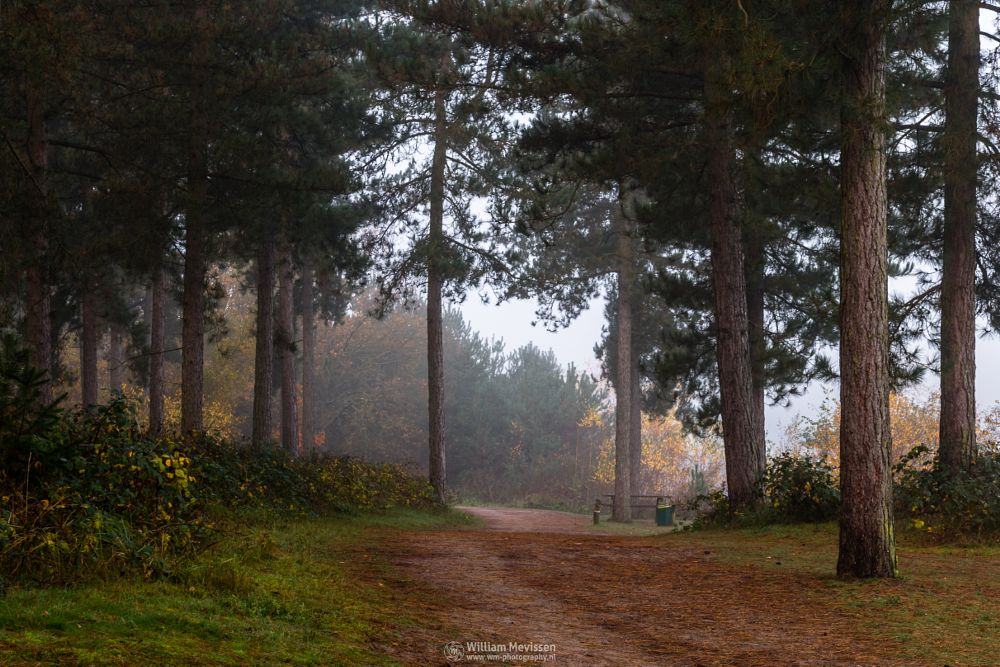 Photo in Nature #misty #mist #yellow #foggy #fog #light #green #morning #tree #trees #pine #pine forest #autumn #forest #trunk #silence #mood #path #hdr #reindersmeer #maasduinen #lake #limburg #noord-limburg #well #national park #nature