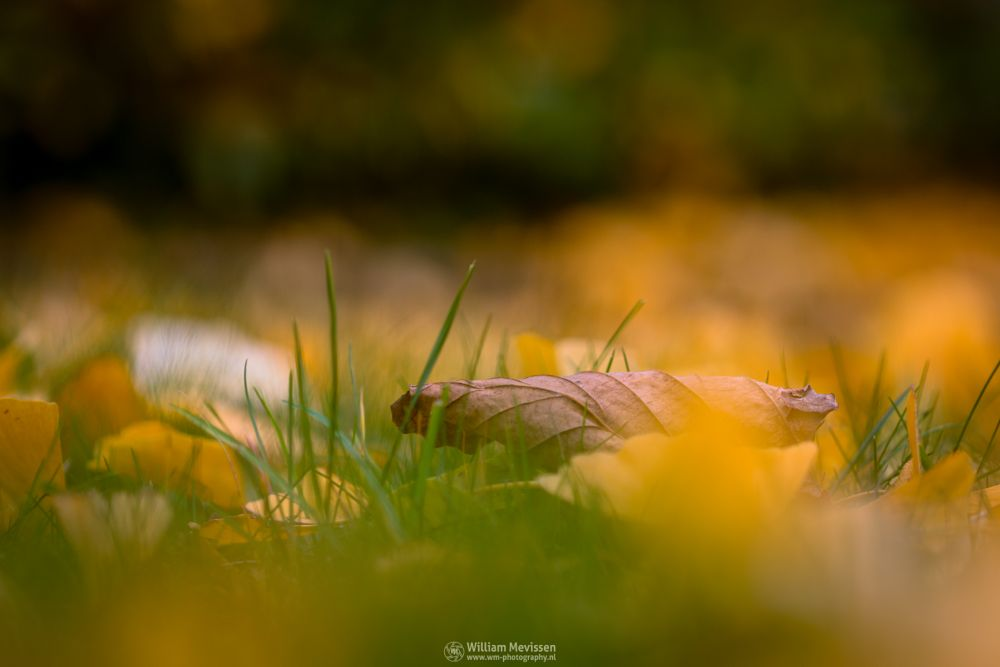 Photo in Macro #autumn #ginkgo #gold #golden #yellow #brown #green #leave #leaves #foliage #grass #garden