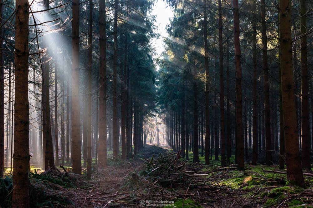 Photo in Nature #rays #geijsteren #forest #light #dark forest #noord-limburg #trees #beams #venray #oostrum #geysteren #misty #estate #autumn #landgoed geijsteren