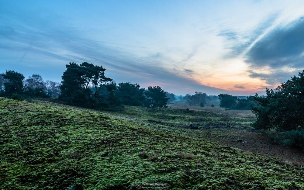 Photo in Landscape #bergerheide #forest #woods #heathland #maasduinen #limburg #noord-limburg #nieuw-bergen #bergen #national park #nature #sand #dunes #sanddunes #trees #sky #twilight #winter #cold #misty #mist #foggy #fog #moss #hilly #sloping #landscape #hdr