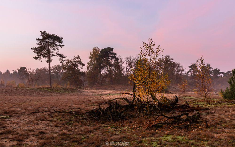 Photo in Landscape #forest #nature reserve #bosserheide #trees #tree #light #shifting sand #sand #sanddunes #twilight #sunrise #dawn #maasduinen #limburg #noord-limburg #well #national park #limburgs landschap #foliage #death #autumn #orange #yellow #green #pink #purple #death tree