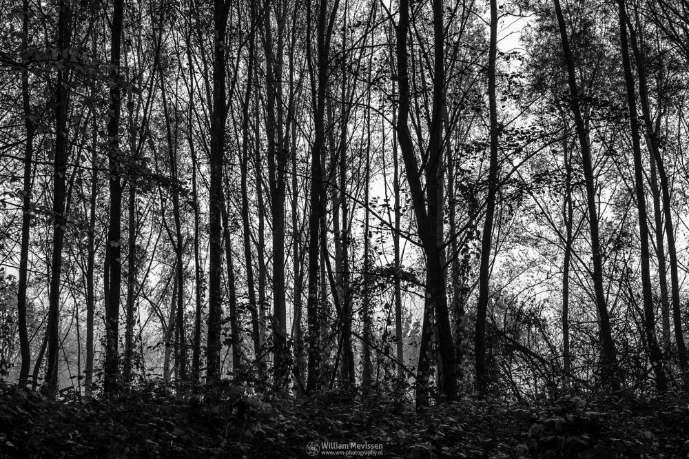 Photo in Black and White #geijsteren #venray #oostrum #landgoed geijsteren #landgoed #estate #weichs de wenne #limburg #noord-limburg #nature #nature reserve #forest #woods #autumn #leaves #geysteren #foliage #light #tree #trees #mist #misty #fog #foggy #silhouette #silhouettes #b&w #black and white #black & white