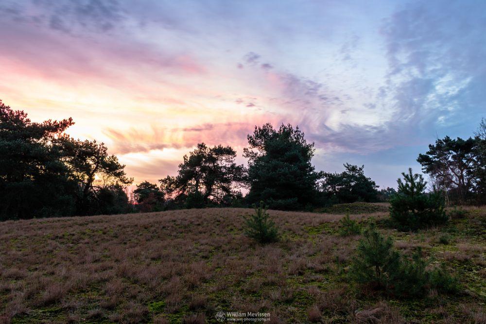 Photo in Nature #bergerheide #forest #woods #heathland #maasduinen #limburg #noord-limburg #nieuw-bergen #bergen #national park #nature #long exposure #le #sand #dunes #sanddunes #reindersmeer #sky #flames #flaming sky #colors #twilight #sunrise #trees #clouds