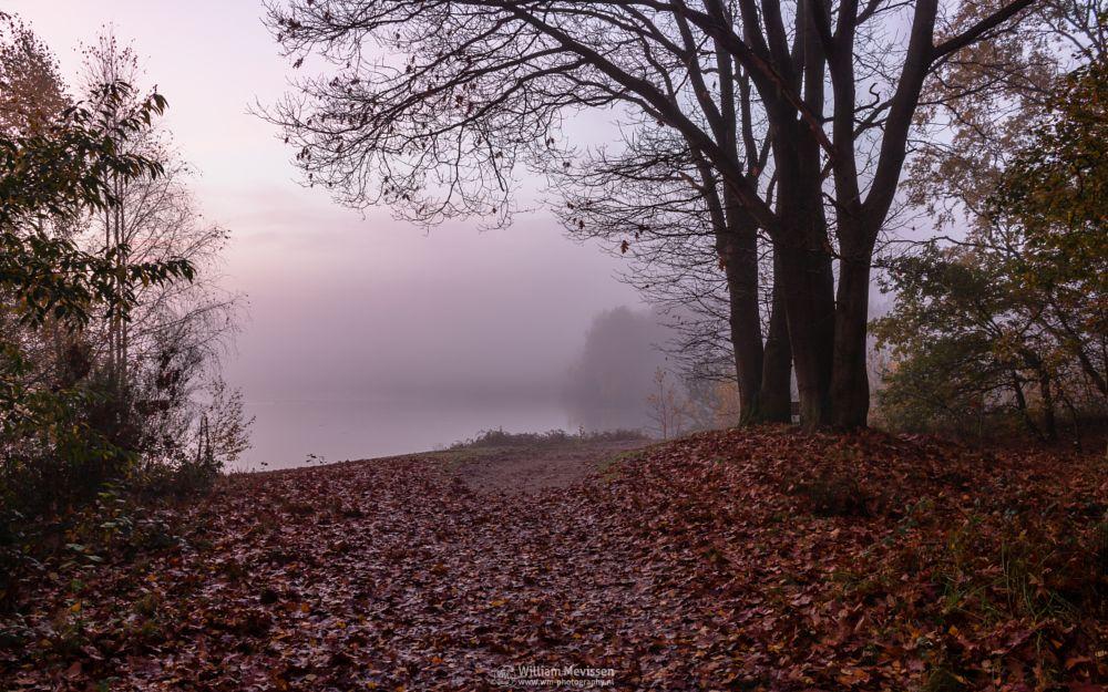 Photo in Landscape #misty #mist #foggy #fog #light #morning #trees #tree #autumn #forest #silence #mood #path #silhouettes #lake #reindersmeer #maasduinen #limburg #noord-limburg #well #national park #nature