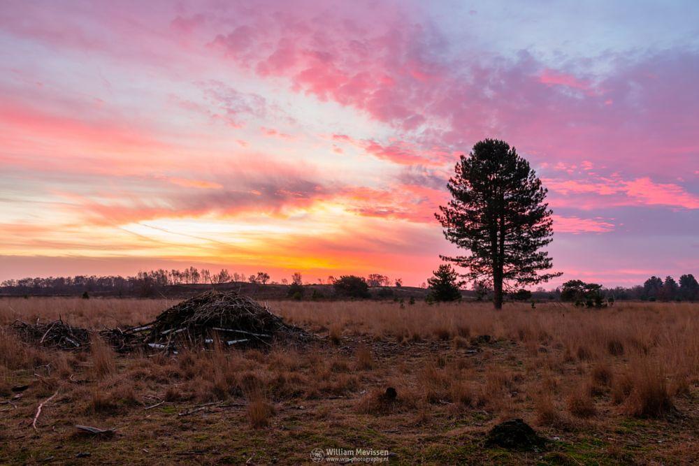 Photo in Landscape #bergerheide #forest #woods #heathland #fen #maasduinen #limburg #noord-limburg #bergen #nieuw-bergen #national park #nature #reindersmeer #sand #dunes #sanddunes #tree #sky #cloudy #clouds #light #twilight #colours #colors #yellow #purple #red