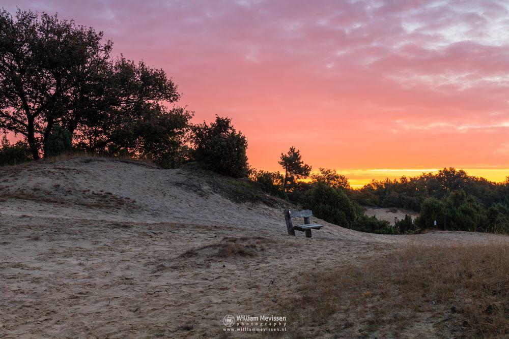 Photo in Landscape #boshuizerbergen #limburg #noord-limburg #venray #nature #forest #netherlands #sunrise #woods #light #sunlight #bench #juniper #jeneverbes #sand #sanddunes