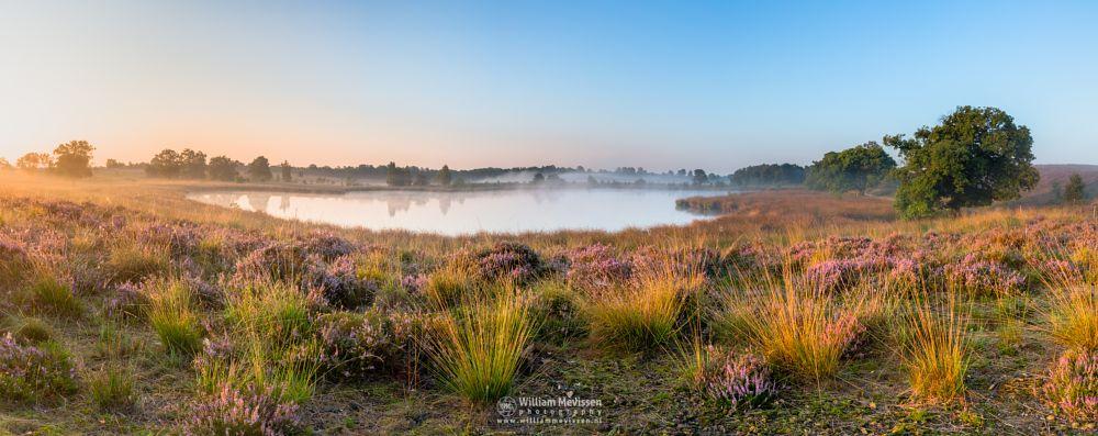 Photo in Landscape #fen #pikmeeuwenwater #maasduinen #heathland #wellerlooi #limburg #noord-limburg #bergen #nature #light #water #trees #fog #mist #hamert #dehamert #pano #panorama