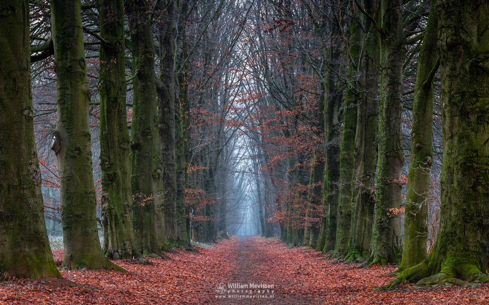 Photo in Nature #geijsteren #venray #oostrum #landgoed geijsteren #limburg #noord-limburg #nature #forest #winter #tree #path #mood #mist #autumn