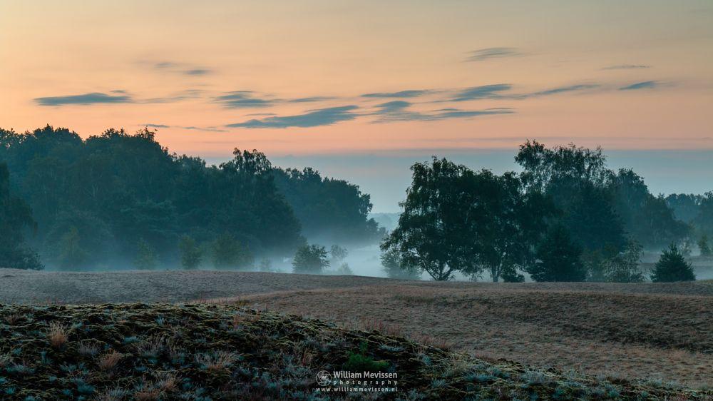 Photo in Landscape #bergerheide #forest #woods #heathland #maasduinen #limburg #noord-limburg #nieuw-bergen #bergen #national park #nature #sand #sanddunes #dunes #land #light #cloudy #trees #twilight #moss #sunrise