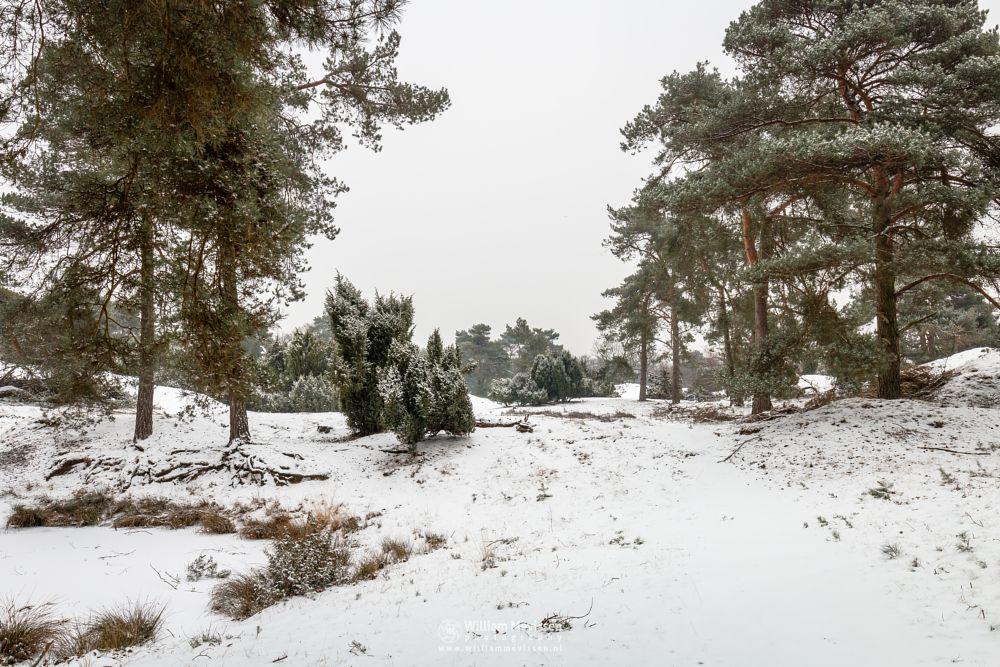 Photo in Landscape #forest #woods #netherlands #snow #winter #trees #pool #ice #fen #winterlandscape #treeswinterscape #venray #limburg #boshuizerbergen #boschhuizerbergen #noord-limburg #nature