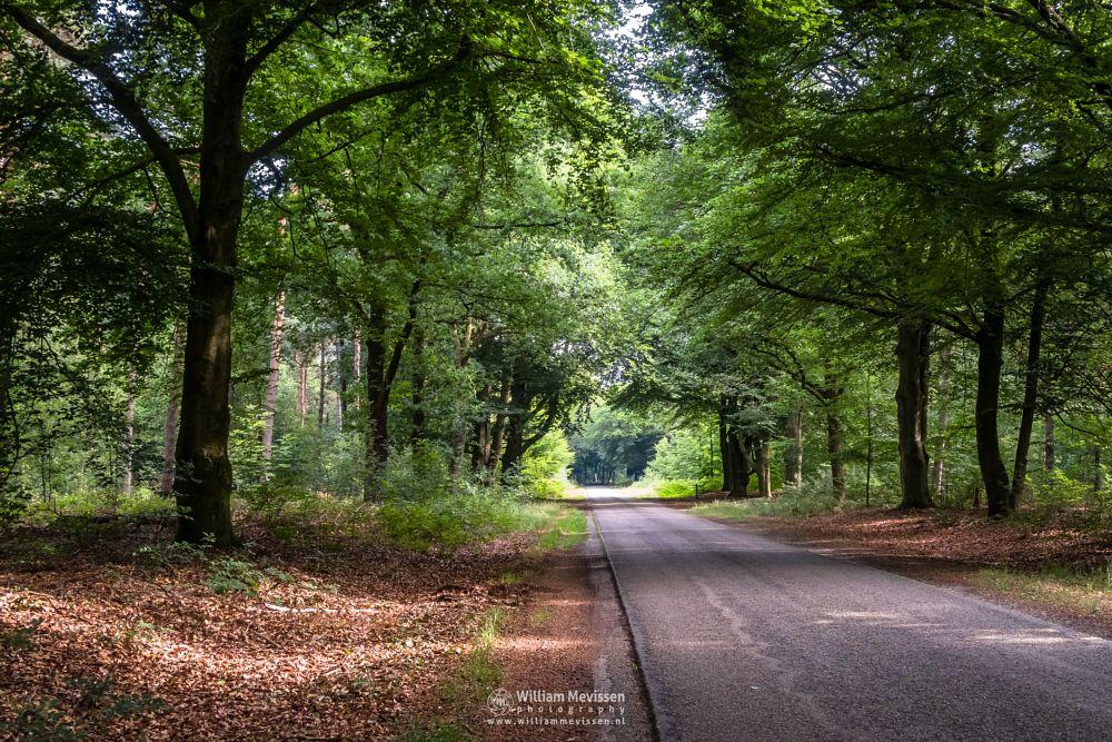 Photo in Nature #venray #limburg #noord-limburg #merselo #nature #trees #netherlands #ballonzuilbossen #ballonzuil #forest #summer #silhouette #woods #sunlight #mood #monument