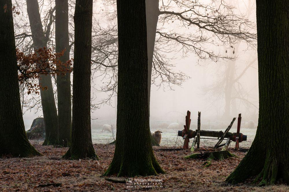 Photo in Nature #geijsteren #venray #oostrum #landgoed geijsteren #limburg #noord-limburg #nature #trees #geysteren #forest #mood #mist #rosmolen #sheep