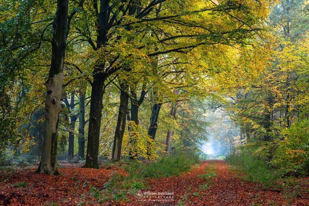 Photo in Nature #netherlands #nature #autumn #beech #woods #limburg #venray #merselo #noord-limburg #trees #ballonzuilbossen #forest #mist #sun #fog #mood