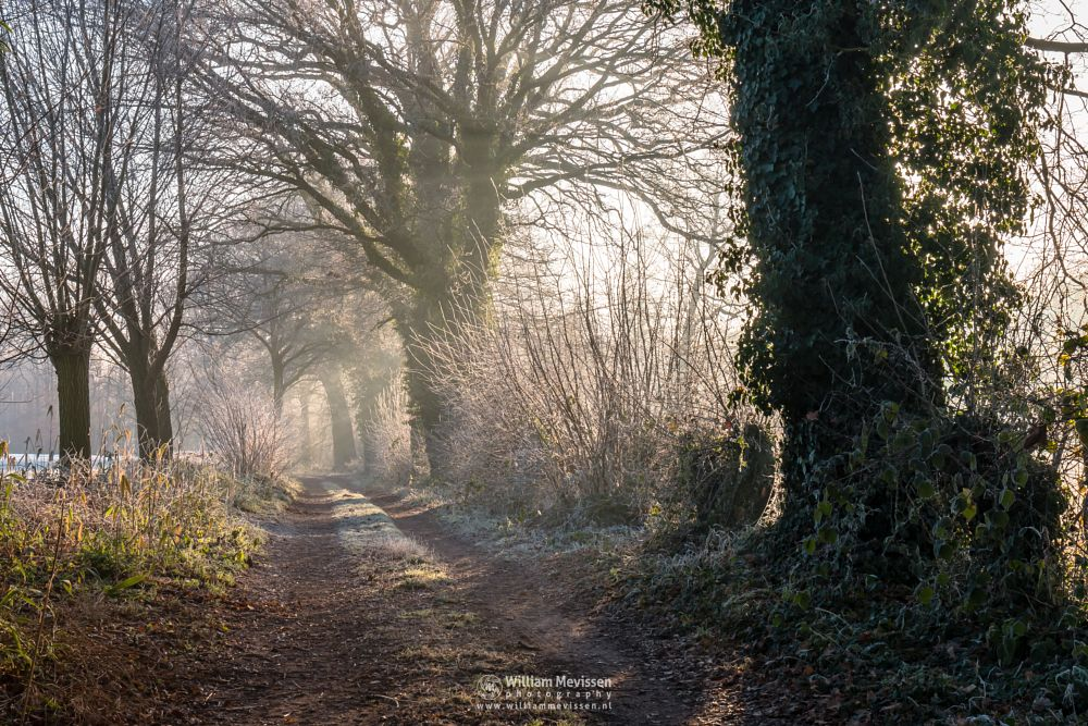 Photo in Nature #fog #frost #geysteren #trees #forest #sunlight #path #layers #nature #geijsteren #limburg #oostrum #venray #landgoedgeijsteren #noordlimburg