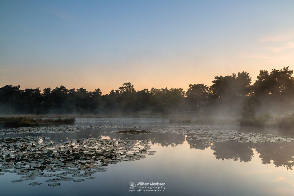 Photo in Landscape #waterlily #leaves #ravenvennen #lomm #limburg #arcen #nature #forest #woods #velden #netherlands #venlo #foggy #fog #mist #swamp #fen #mood #silhouette #silhouettes #trees #tree #sunrise