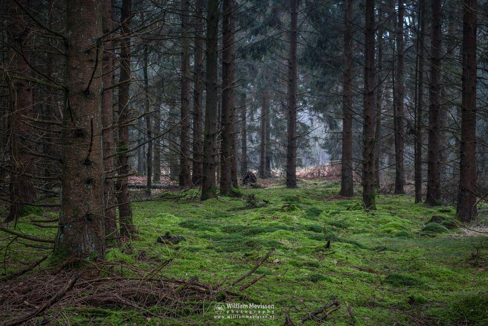 Photo in Nature #ballonzuil #venray #merselo #overloon #forest #limburg #noord-limburg #ballonzuilbossen #nature #woods #moss #light #winter #trees